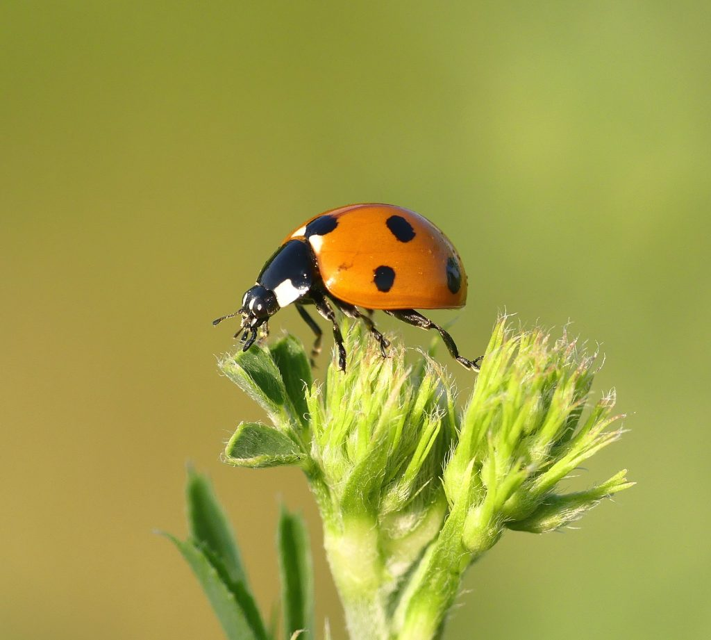 An image of a lady bug